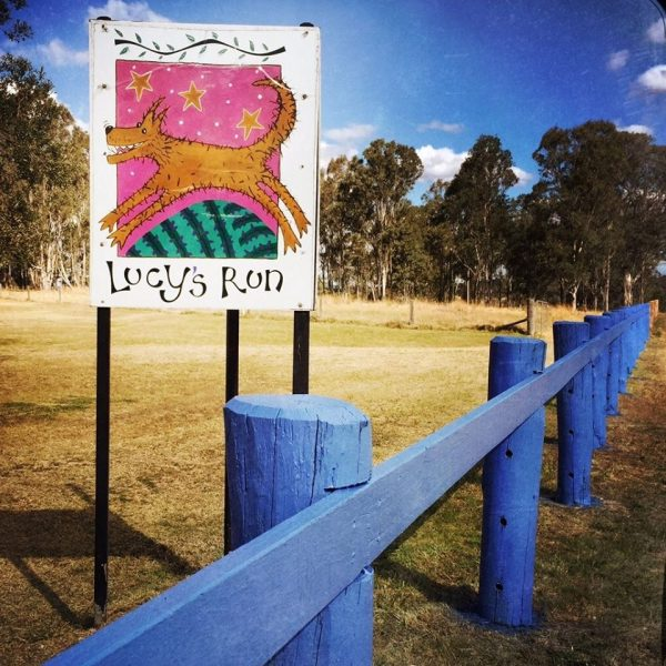 Lucy's Run Wines – watch out for our blue fence along Wine Country Drive, Lovedale